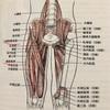 大腿筋膜張筋を緩める、足が棒の様になる方・腰が落ちずに棒立ちになる方・クライマー・武術家・一般の方々にもオススメです。『円襠』『馬捗站襠』もご紹介します。