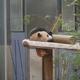 上野動物園のシャンシャンを観に行こう!9時に並べば観られます!