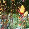 新宿御苑で見た植物⑯ ツンベルギア・マイソレンシス