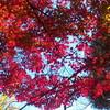 浦和の秋風景