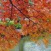 成田山の庭園の紅葉