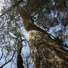 春の奥物部の森「不思議な場所で」