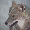 人狼ゲームをSkypeとLINEで遊んできた話