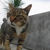 7月前半の #ねこ #cat #猫 その3