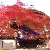 11月29日、紅葉の美しい光明寺へご一緒にお参りしませんか?