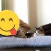 【愛猫日記】毎日アンヌさん#227