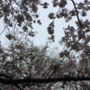 東京23区の春の雪と救援物資