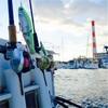 幸運の東京湾シーバス釣り