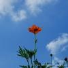 コスモスと思しき花