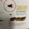アリヅカコオロギって知ってますか?