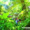 ジャングル探検してみよう!