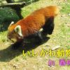 【春休みのいしかわ動物園 】新設のトキ里山館でコスプレ体験