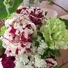 母の日のプレゼント花