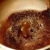 活性炭の約5倍!トイレのアンモニア脱臭にはコーヒーが効く!
