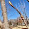 「佐久の季節便り」、旧暦・「正月十五日」、日照無く小雪が舞って…。