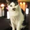 夜の今池駅の猫たち