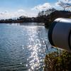 🦜野鳥の回【117】🆕77種類目コブハクチョウ・78種類目オナガガモ~再び出撃!奈良水上池