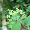 変わりゆく初夏の花々