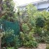 昨日は造園会社による庭の剪定