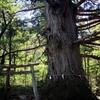 森に飲み込まれた神社は幻をみせる
