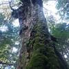 縄文杉に行かない屋久島3泊4日旅行のはなし【2日目】