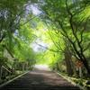 京都 嵐山から法輪寺へゆるっと歩けば殺人事件かっ???