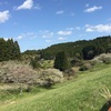 桜、お花見ドライブ🌸