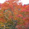塔のへつりの紅葉:福島県南会津郡下郷町