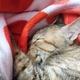 猫のフミフミ