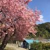 美味しいものと伊豆旅行など 2月13日〜2月19日