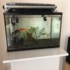 おしゃれでシンプルな金魚の水槽台を発見!【コトブキ工芸】プロスタイルシリーズです
