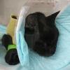 1年前の7月、愛猫に扁平上皮癌が見つかった⑤