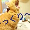 猫さんとのご縁とは・・・って書いた翌日になんと
