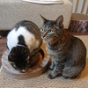 メロディチェイサーとニャンコロビーを買ってみた【猫のおもちゃレビュー】