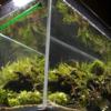 アクアリウム水槽をもっとおしゃれにする3つのポイント!