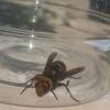 大人の昆虫採集
