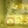 金魚の針子、屋外飼育2日目