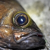 【検証・ガムとかゴミでも簡単に釣れる?】堤防 メバル釣りの限界はどこか