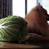 野菜の頂きもの いっぱい^^