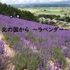 北の国からラベンダー【北海道富良野】