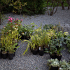 工事日誌:石張り、ジューンベリー植栽
