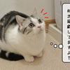 猫の道具 ~むくの新たな獲物?~