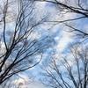 木… その3