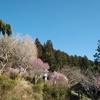 【変更と中止の再度のお知らせ】普濟寺恒例の春季大護摩祭