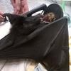 コウモリと狂犬病と、動物感染症研究所