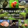 苔取り貝おすすめ10選!苔取り能力が高く飼育し易い貝ランキング!
