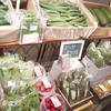 有機野菜販売します!@札幌駅地下歩行空間北3条広場