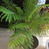 新芽成長!!&観葉植物に対する液体肥料について