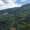 スリランカの茶畑でイギリス気分に至る