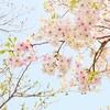 源氏物語を知り、楽しむためのおすすめの本・マンガ10選